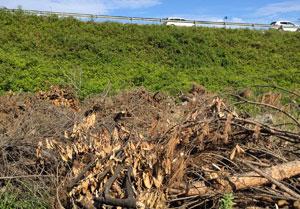 Arbusti-e-legno,-sfalci-di-potature-